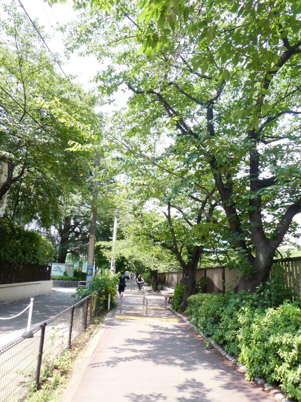 目黒区美術館に続く桜並木の遊歩道